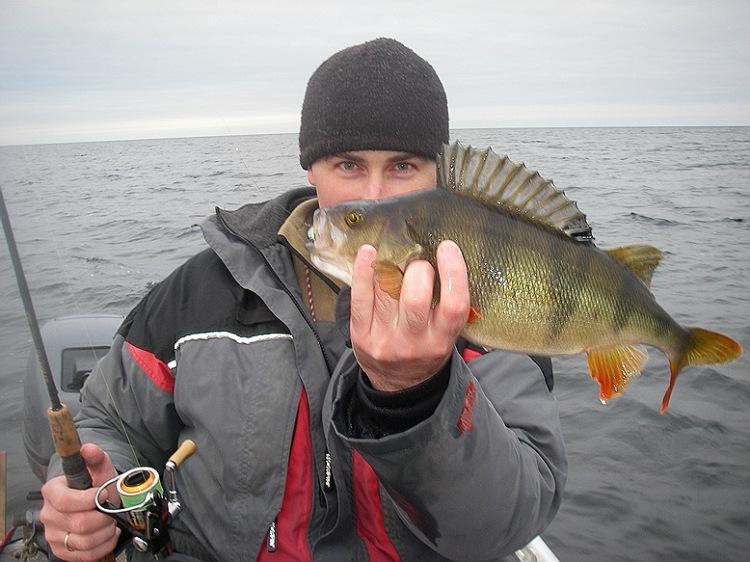 комбинатор рыбалка