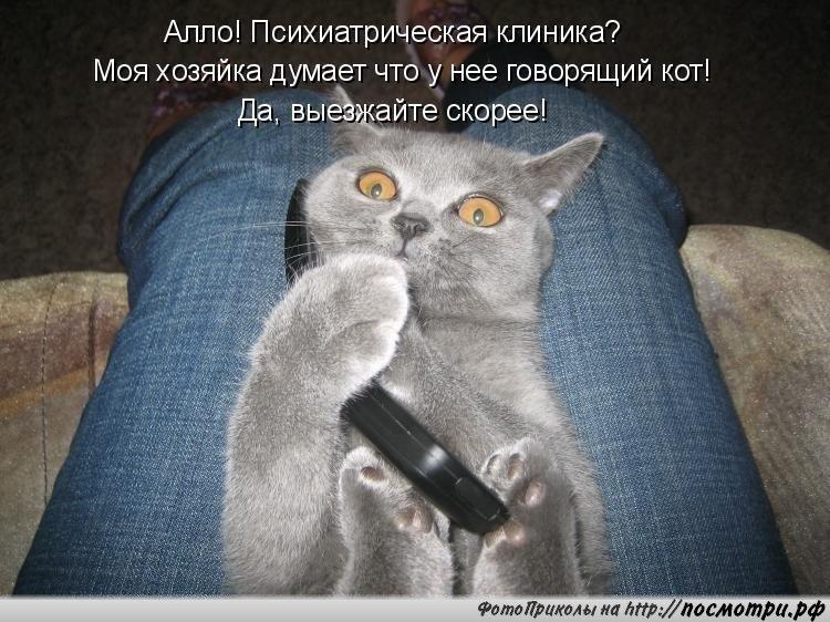 Фото кошек с анекдотами